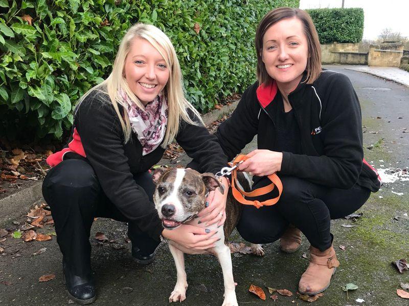 Pennine Dog Rescue